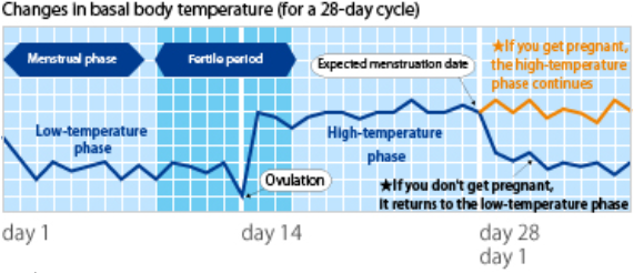 changes in basal body temperature